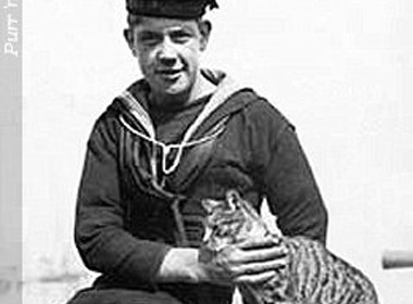 cat-and-sailor