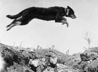 dog-leaping-over-trench