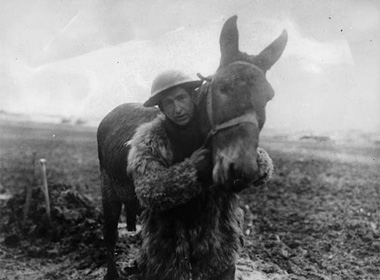mule-and-soldier