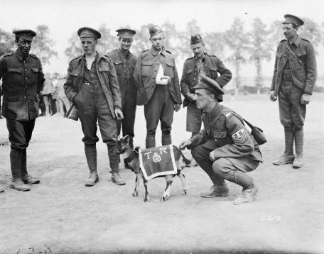 Mascot of the 3rd Canadian Infantry Battalion, August 1916.